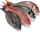 polarpak fishmongers